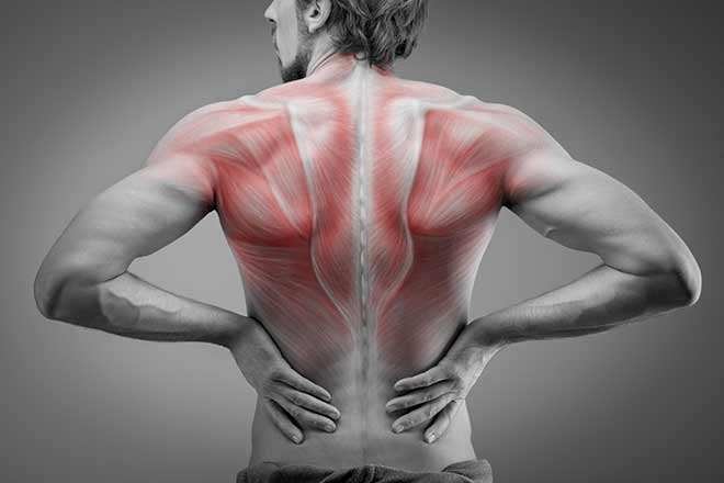 back muscle groups | Hands of serenity massage